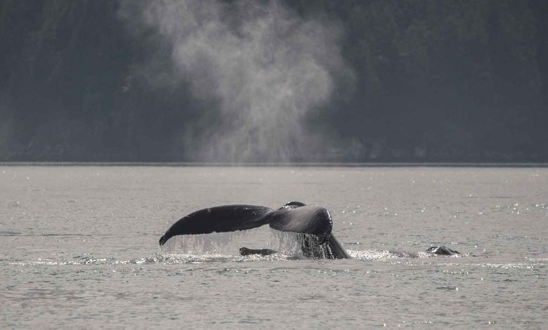 Whale viewing from ship